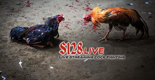 Berjudi Sabung Ayam Online Deposit Paling Murah